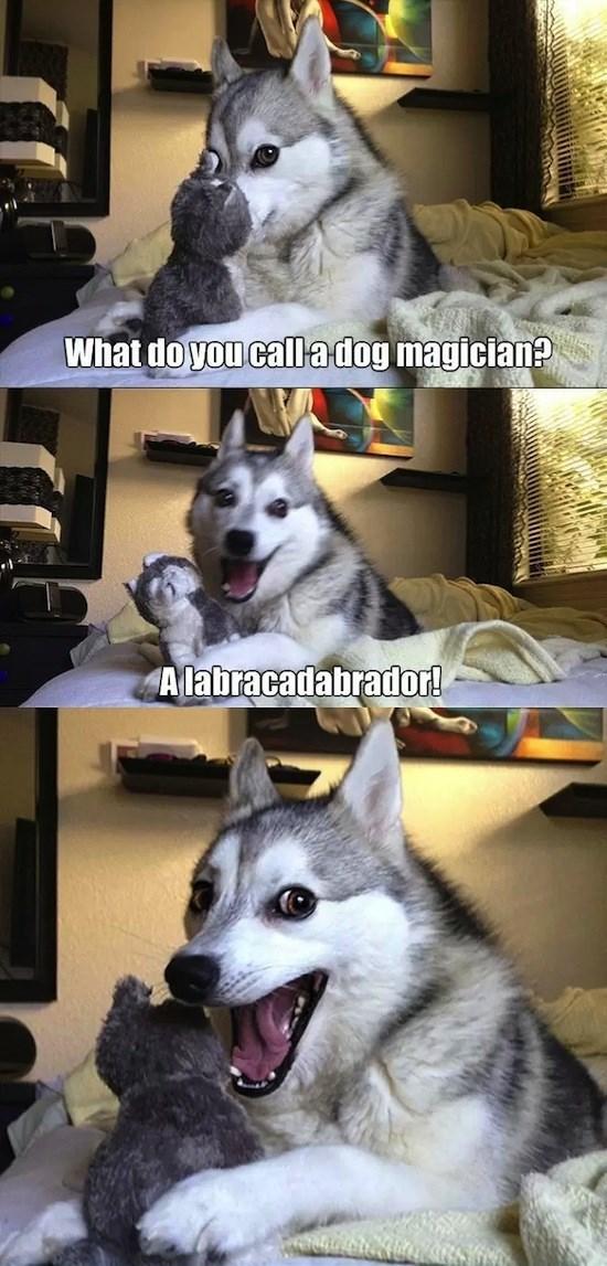 Mammal - What do you call adog magician? Alabracadabrador!