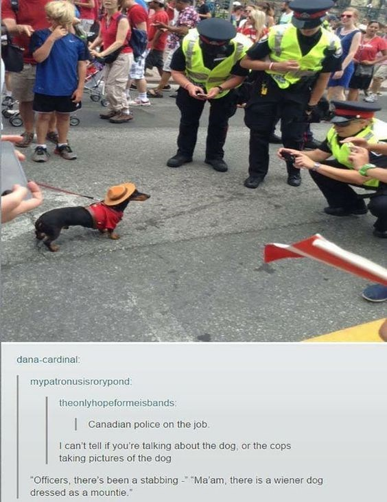 "Event - dana-cardinal: mypatronusisrorypond theonlyhopeformeisbands: Canadian police on the job. I can't tell if you're talking about the dog, or the cops taking pictures of the dog ""Ma'am, there is a wiener dog ""Officers, there's been a stabbing dressed as a mountie."