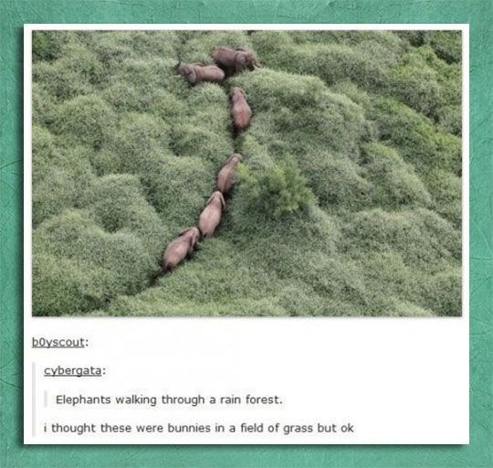 Organism - boyscout cybergata: Elephants walking through a rain forest. i thought these were bunnies in a field of grass but ok