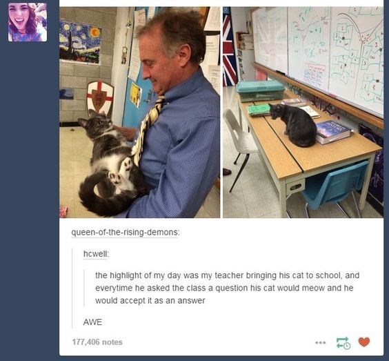 Photo caption - queen-of-the-rising-demons: hcwell: the highlight of my day was my teacher bringing his cat to school, and everytime he asked the class a question his cat would meow and he would accept it as an answer AWE 177,406 notes