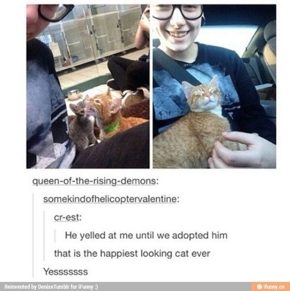Photography - queen-of-the-rising-demons: somekindofhelicoptervalentine: cr-est: He yelled at me until we adopted him that is the happiest looking cat ever Yesssssss Reinvented by Denise Tumblr for iFunny) @ ifuniny.co