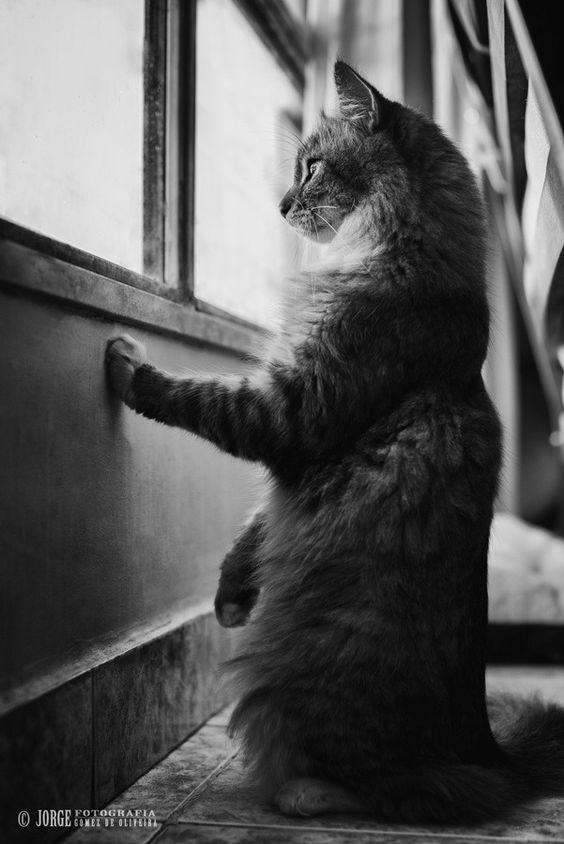 Cat - FOTOGRAFIA JORGE ML LIB