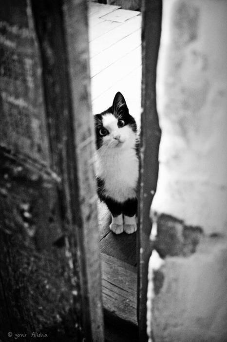 Cat - Jonr Alisha