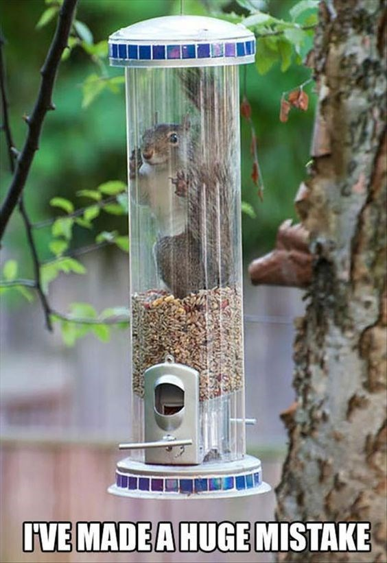 Bird food - IVE MADE A HUGE MISTAKE