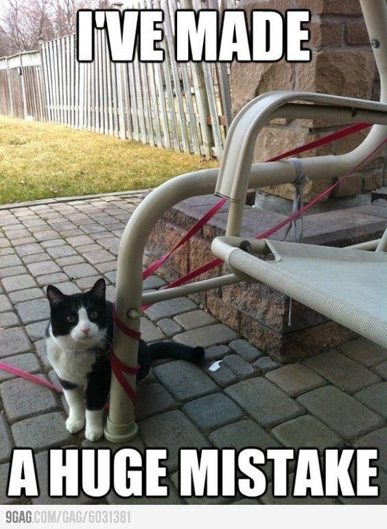 Cat - JVE MADE A HUGE MISTAKE 9GAG.COM/GAG/6031381