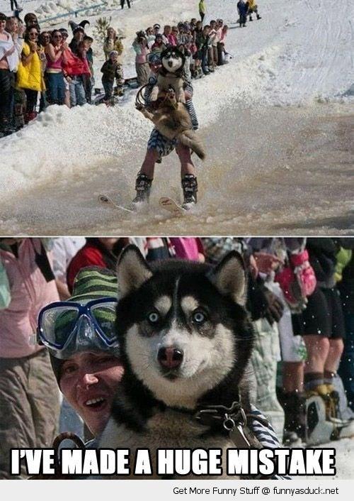 Dog - IVE MADE A HUGE MISTAKE Get More Funny Stuff @ funnyasduck.net