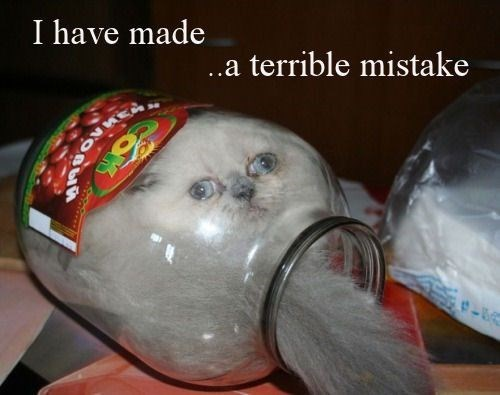 Cat - I have made ..a terrible mistake