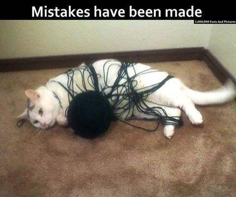 Cat - Mistakes have been made 1,000,000 Facts And Pirteres