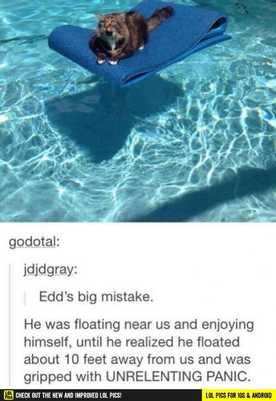 Swimming - godotal: jdjdgray: Edd's big mistake. He was floating near us and enjoying himself, until he realized he floated about 10 feet away from us and was gripped with UNRELENTING PANIC. 0CHECK OUT THE NEW AND IMPROVED LOL PICS! LOL PICS FOR IOS & ANDROID Pies