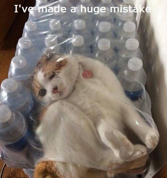 Cat - I've made a huge mistake 50324 06 14