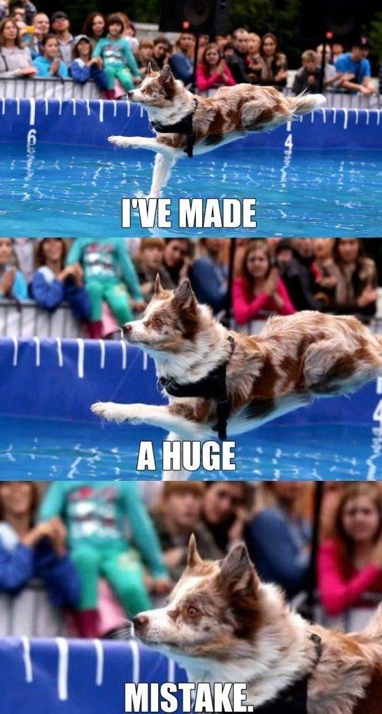 Dog breed - IVE MADE A HUGE MISTAKE