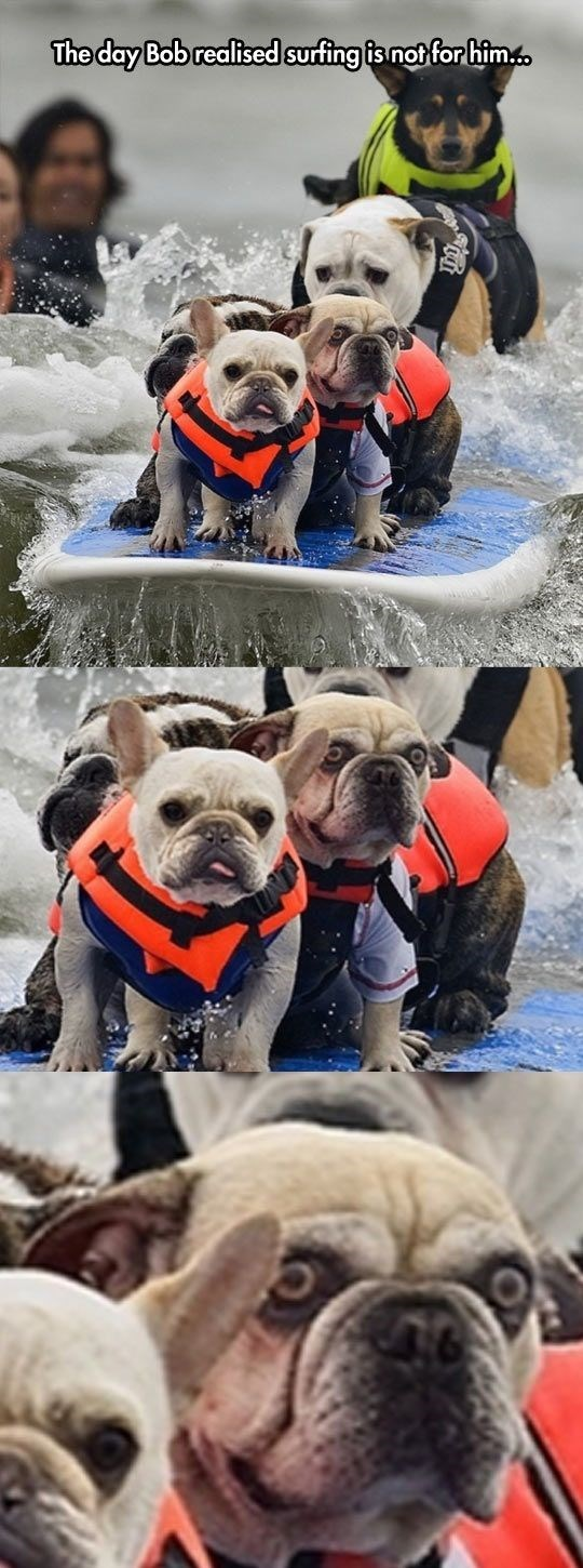 Dog - The day Bob realised surfing is not for him
