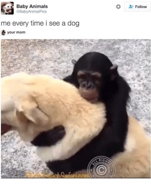 dog meme of a monkey hugging a dog