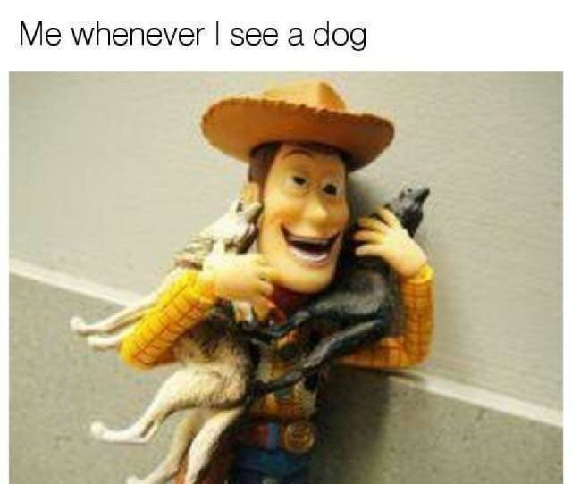 dog meme of Woody hugging toy plastic dogs