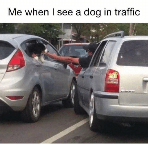 dog meme of cars that got into an accident after they saw a dog