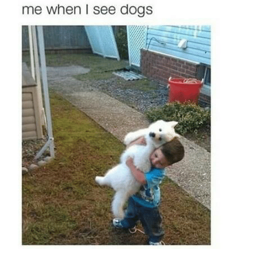 dog meme of a kid holding up a dog that is his size