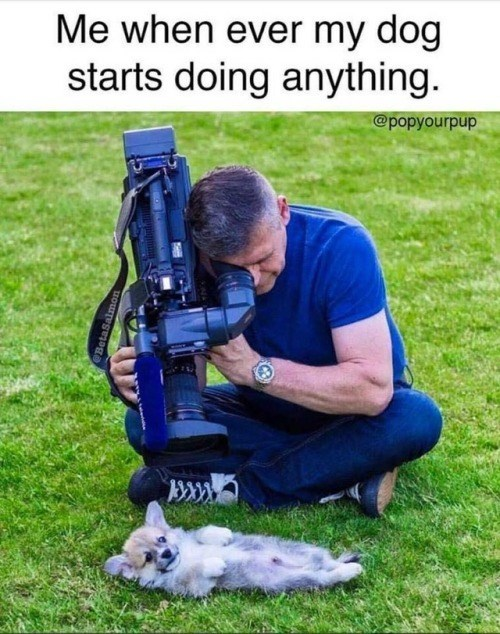 dog meme about taking a picture of your dog when it does anything