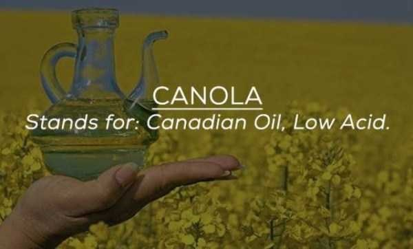Organism - CANOLA Stands for: Canadian Oil, Low Acid.