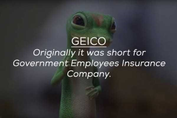 Organism - GEICO Originally it was short for Government Employees Insurance Company