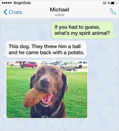 Dog - 52% .BrightSide Michael KChats online If you had to guess what's my spirit animal? This dog. They threw him a ball and he came back with a potato 100
