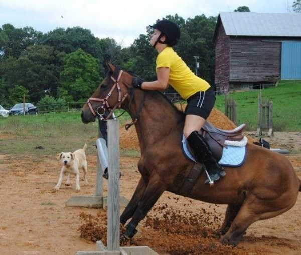 perfect timed photo - Horse