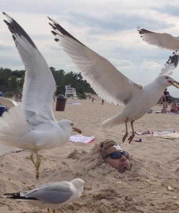 perfect timed photo - Bird
