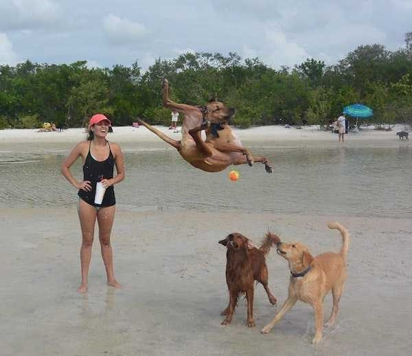 perfect timed photo - Dog