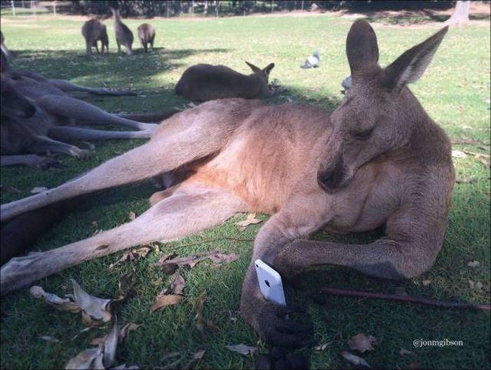 Kangaroo - @jonmgibson