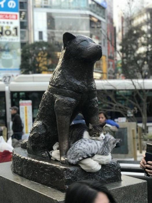 Bear - イの 27