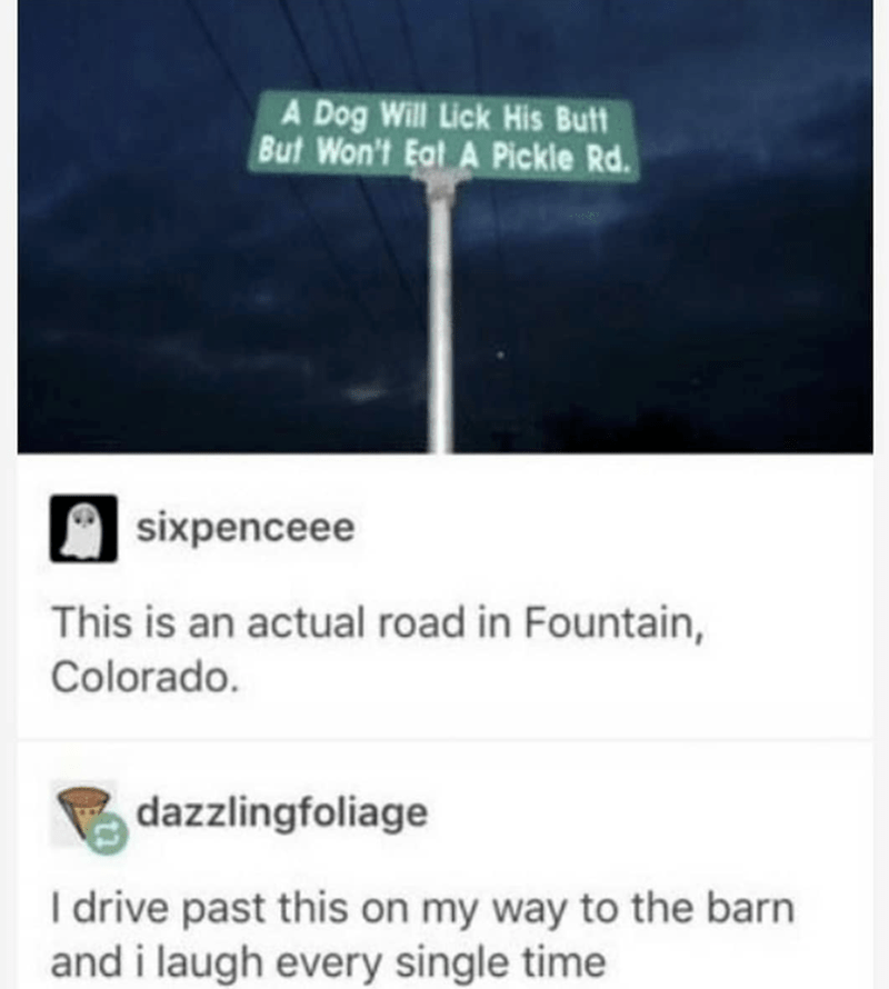 Text - A Dog Will Lick His Butt But Won't Eat A Pickle Rd. sixpenceee This is an actual road in Fountain, Colorado. dazzlingfoliage Idrive past this on my way to the barn and i laugh every single time