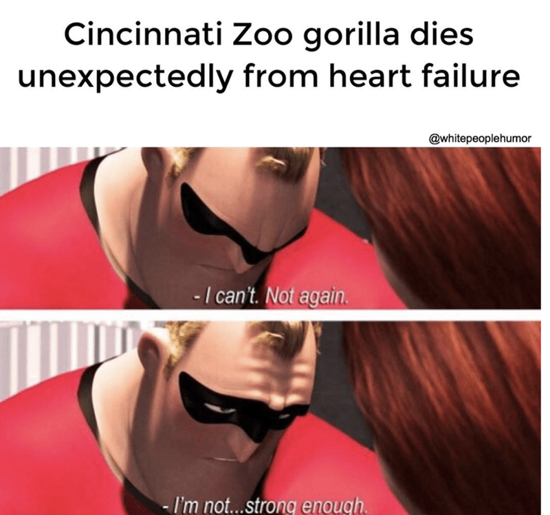 Hair - Cincinnati Zoo gorilla dies unexpectedly from heart failure @whitepeoplehumor -1 can't. Not again - I'm not..strong enough