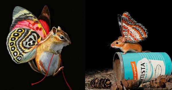 art,butterfly,creatures,artist,chipmunk,colorful,mouse