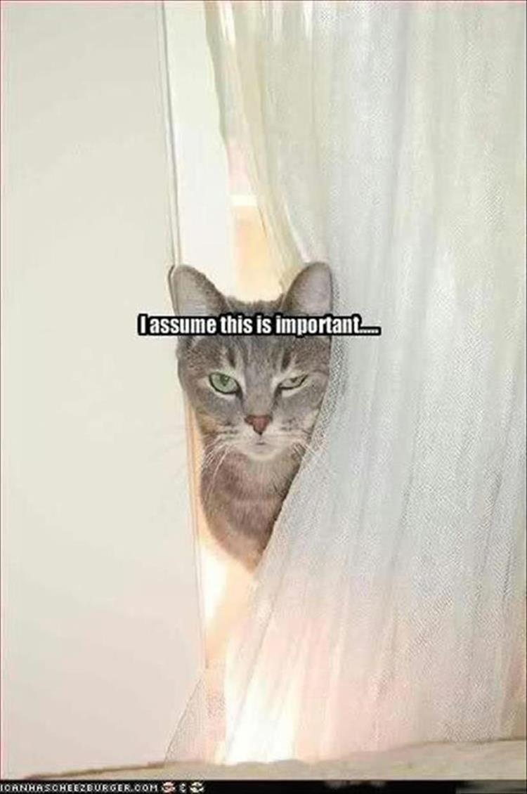 caturday - Cat - lassume this is important 1OANHASOHERBURGEROOM