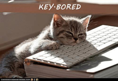 meme - Cat - KEY BORED CANHASCHEE2EURGER cOM