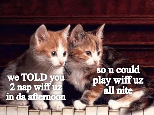 meme - Cat - so u could play wiff uz all nite we TOLD you 2 nap wiff u in da afternoon