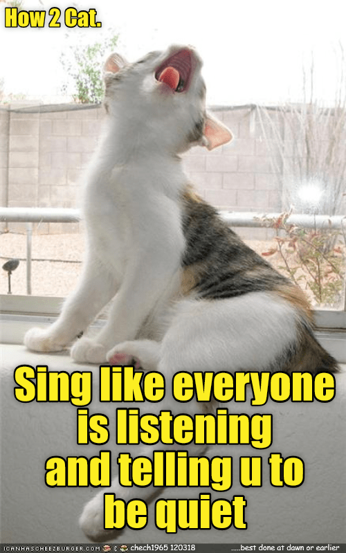 meme - Cat - How 2 Cat Sing like everyone is listening and telling u to be quiet chech1965 120318 .....best done at dawn or earlier ICANHASCHEEZBURGER cOM
