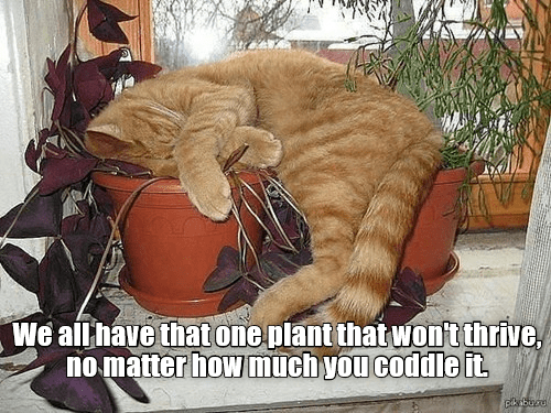 meme - Cat - We allhave that one plant that Wont thrive no matter how much you coddle it pikbugu