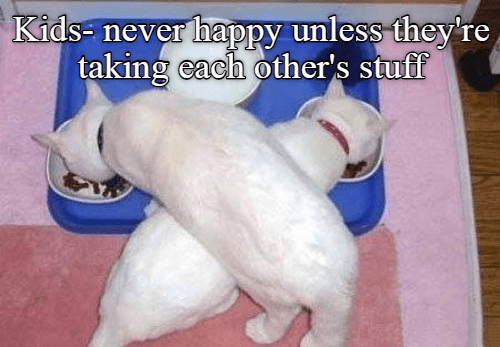 meme - Dog breed - Kids- never hapPPy unless they're taking each other's stuff