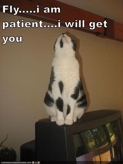 meme - Photo caption - Fly.....i am patient.... will get you ICANHASCHEE2EURGER cOM