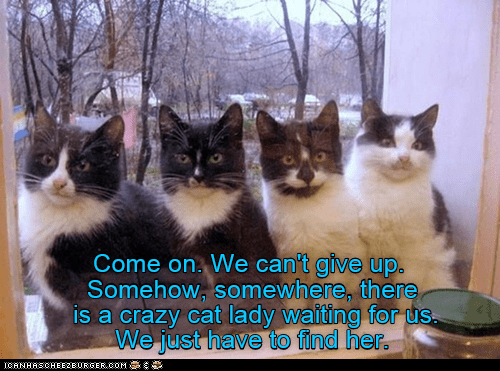 meme - Cat - Come on. We can't give up. Somehow, somewhere, there is a crazy cat lady waiting for us. We just have to find her. CANHASCHEE2EURGER cOM
