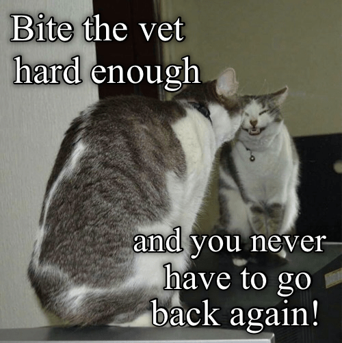 meme - Photo caption - Bite the vet hard enough and you never have to go back again!