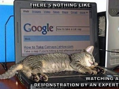 meme - Cat - THERE S NOTHING LIKE Web Imagos Video News Maps Gmal more Google how to take a cat nap Web How to Take Catnaps eHow.com Take a nap if you're hitting a mid-aftemoon slump WATCHING A DEMONSTRATION BY AN EXPERT