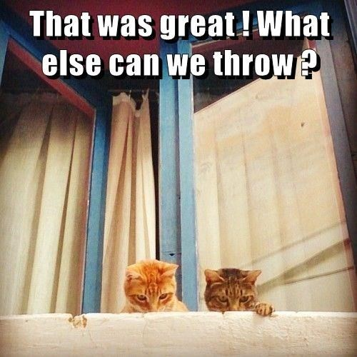 meme - Cat - That was great!What else can we throw?