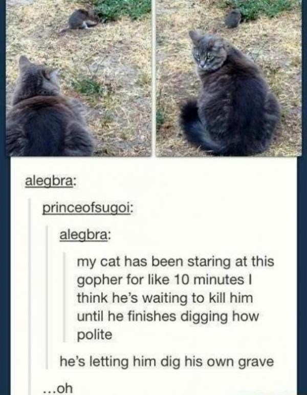 Text - alegbra: princeofsugoi: alegbra: my cat has been staring at this gopher for like 10 minutes I think he's waiting to kill him until he finishes digging how polite he's letting him dig his own grave ...oh
