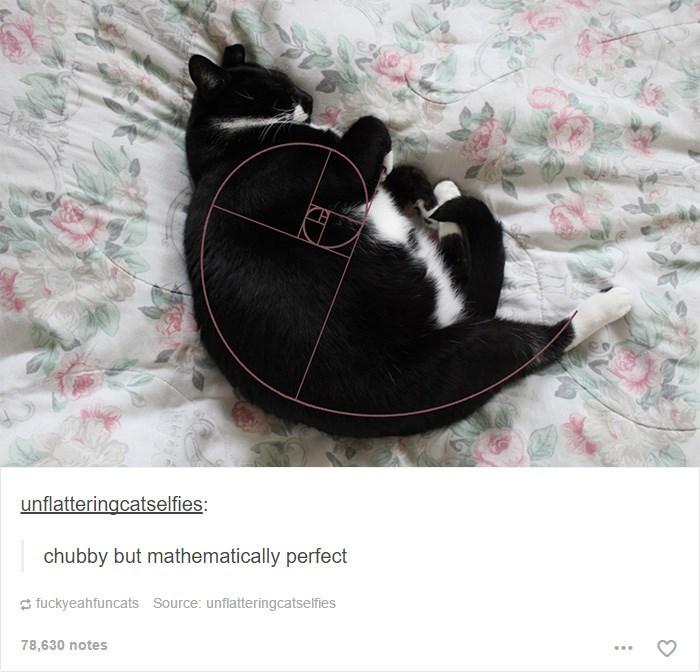 Cat - unflatteringcatselfies: chubby but mathematically perfect fuckyeahfuncats Source: unflatteringcatselfies 78,630 notes