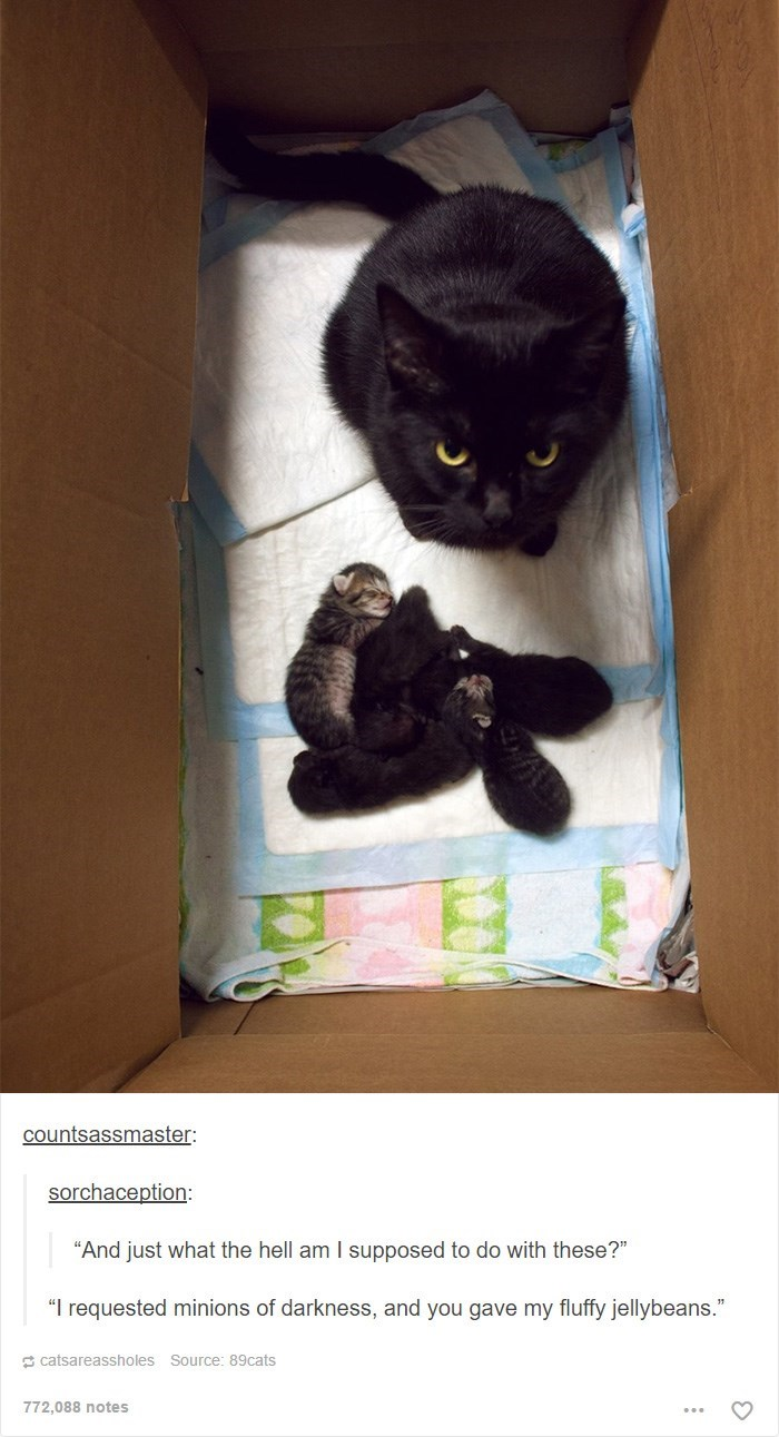 """Cat - countsassmaster: sorchaception: """"And just what the hell am I supposed to do with these?"""" """"I requested minions of darkness, and you gave my fluffy jellybeans."""" catsareassholes Source: 89cats 772,088 notes"""