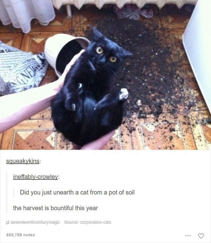 Black cat - GNEW squeakykins: ineffably-crowley Did you just unearth a cat from a pot of soil the harvest is bountiful this year seventeenthcenturymagic Source: corporation-cats 669,788 notes