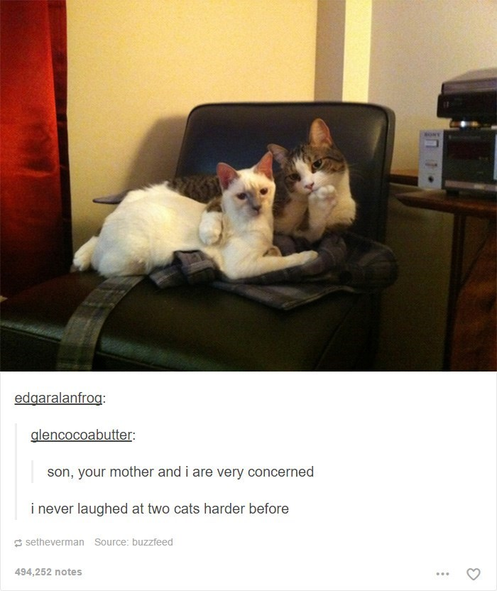 Cat - SONT edgaralanfrog: alencocoabutter son, your mother and i are very concerned i never laughed at two cats harder before setheverman Source: buzzfeed 494,252 notes