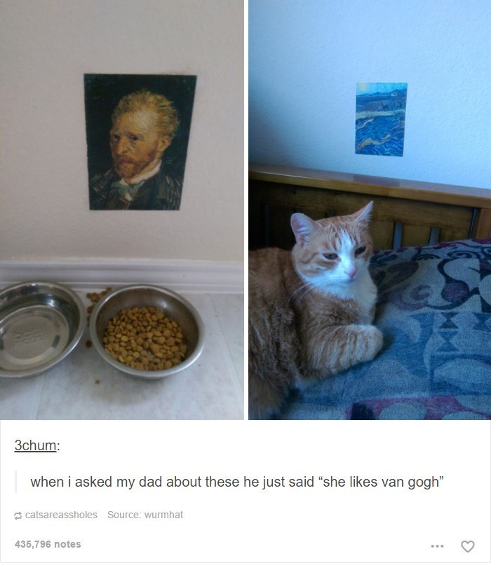 """Cat - 3chum: when i asked my dad about these he just said """"she likes van gogh"""" catsareassholes Source: wurmhat 435,796 notes"""