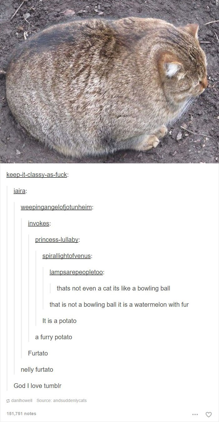 Adaptation - keep-it-classy-as-fuck iaira: weepingangelofiotunheim: invokes: princess-lullaby: spirallightofvenus: lampsarepeopletoo: thats not even a cat its like a bowling ball that is not a bowling ball it is a watermelon with fur It is a potato a furry potato Furtato nelly furtato God I love tumblr danlhowell Source: andsuddenlycats 151.751 notes